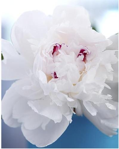 marklund_whiteflower