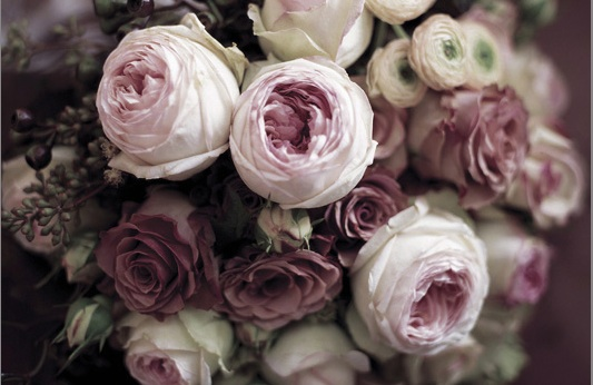 pink_garden_rose_donfreeman