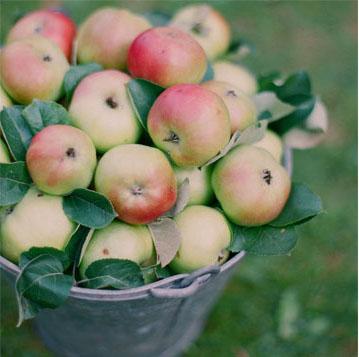 apples_alexmoa