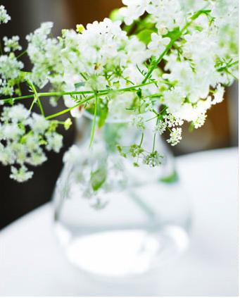 white_flowers_annakern