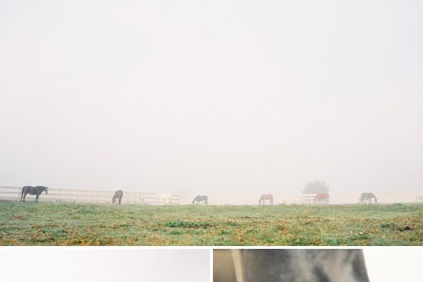 Escape to... A Foggy Morning in Santa Ynez