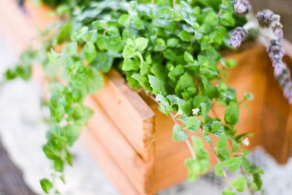 Flower Chic: Herb Centerpiece