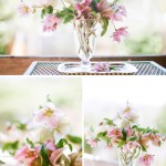 how-to-prepare-hellebore-flowers