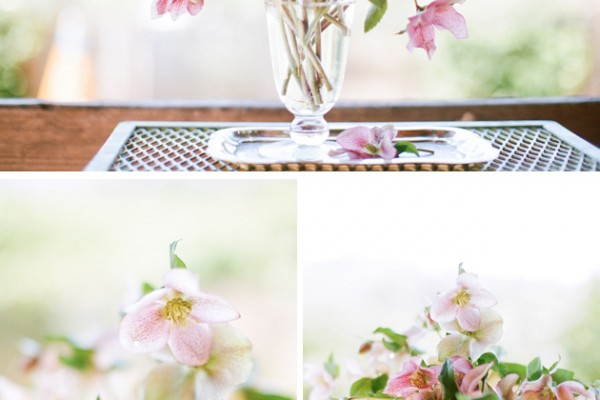 Flower Chic: Delicate Hellebore