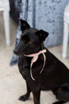 Dog Ring Bearer Ideas Archives Los Angeles Prop Stylist