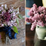 lilac-alternative-flowers-for-valentines-day