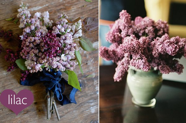 5 Flower Alternatives to Roses for Valentine's Day